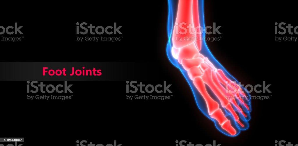 Fotografía de Cuerpo Humano Huesos Dolores En Las Articulaciones ...