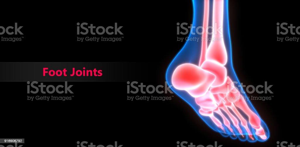 Menschlichen Körper Knochen Gelenkschmerzen Anatomie Stock ...