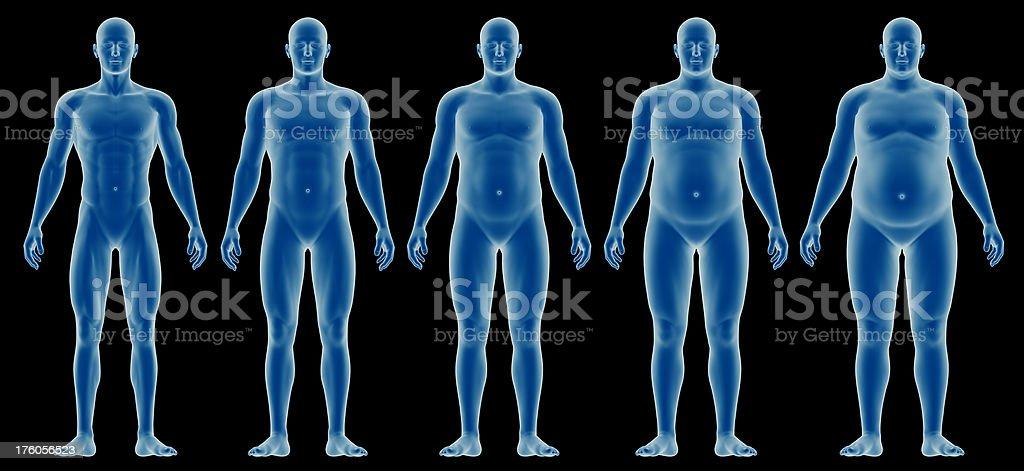 Cuerpo Humano Para El Estudio De Perfil Estrecho Para El Hombre ...