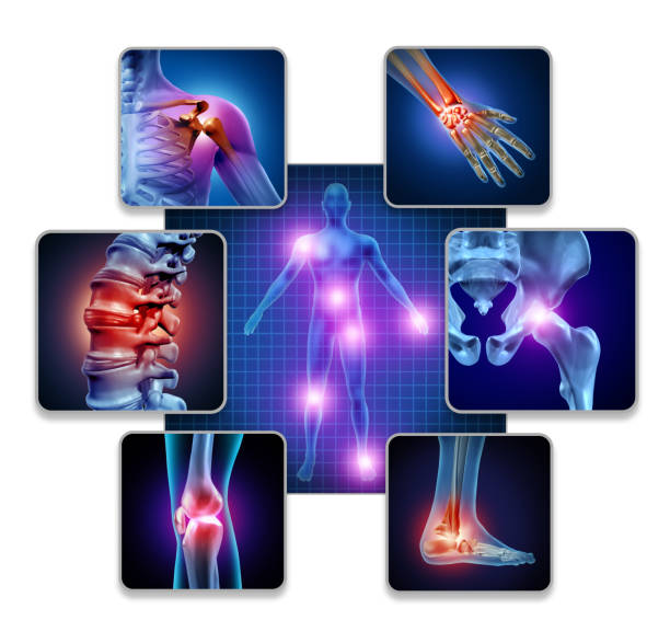 Human Body Joint Pain Human body joint pain concept as skeleton and muscle anatomy of the body with a group of sore joints as a painful injury or arthritis illness symbol for health care and medical symptoms with 3D illustration elements. cartilage stock pictures, royalty-free photos & images