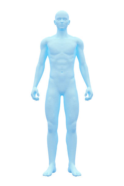 Human Body, Male, Man stock photo