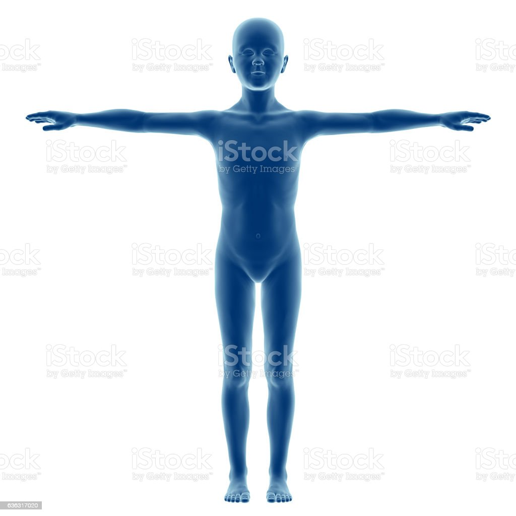 Human body of a child, boy model stock photo