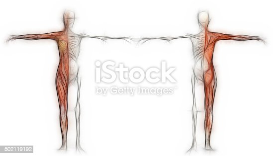 135895161 istock photo Human body of a female with muscles and skeleton 502119192