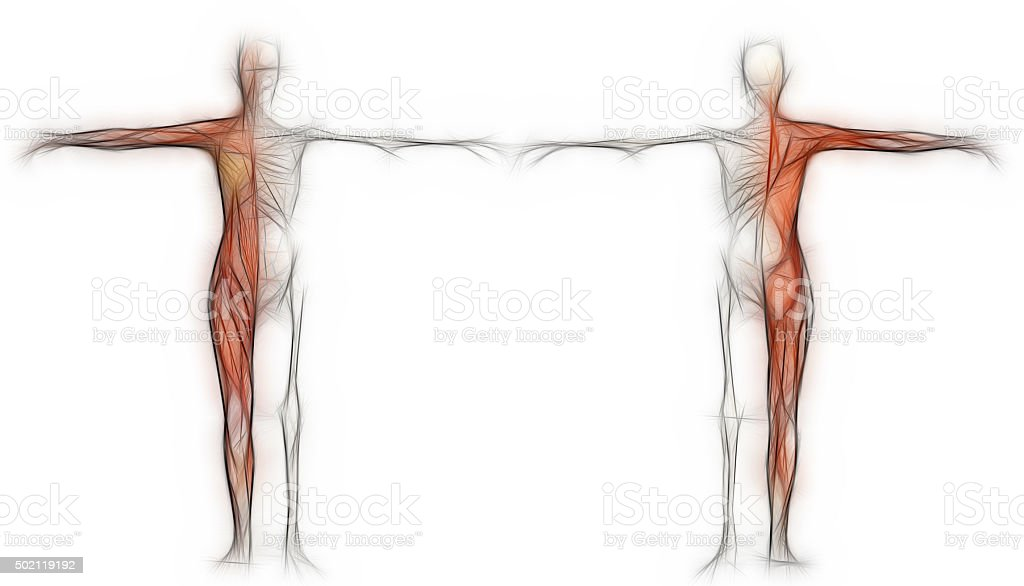 Human body of a female with muscles and skeleton stock photo