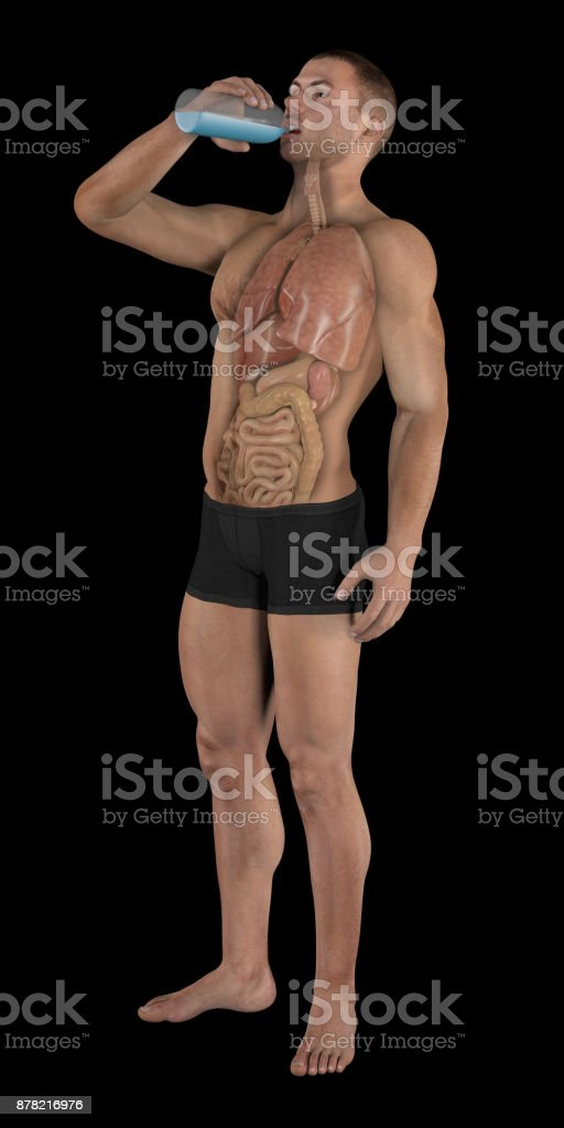 Human body of a man drinking water bottle, showing internal organs stock photo