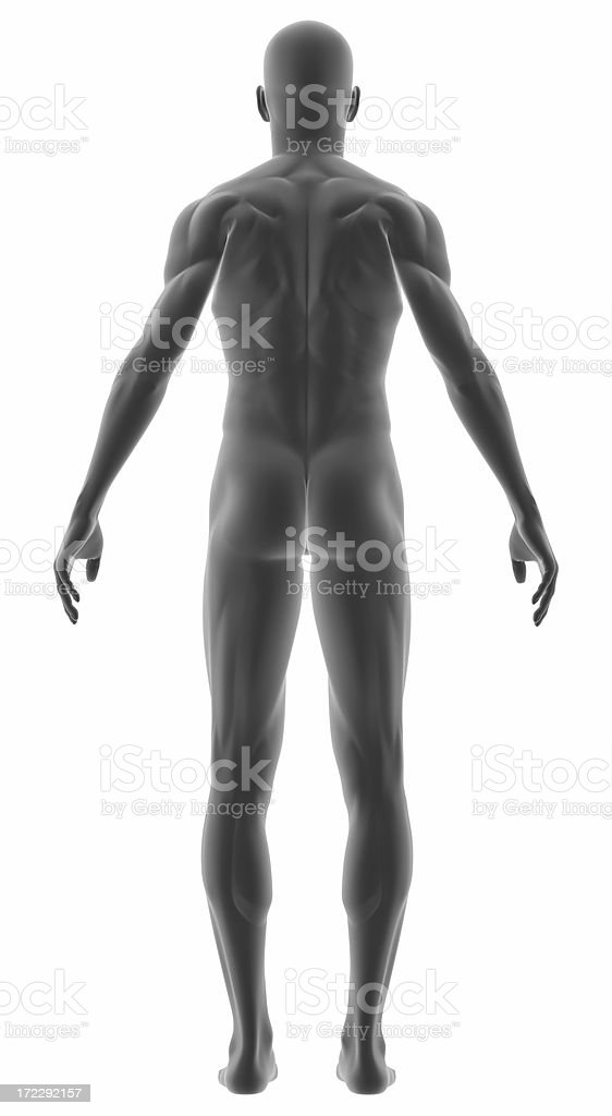 Human body of a man for study stock photo