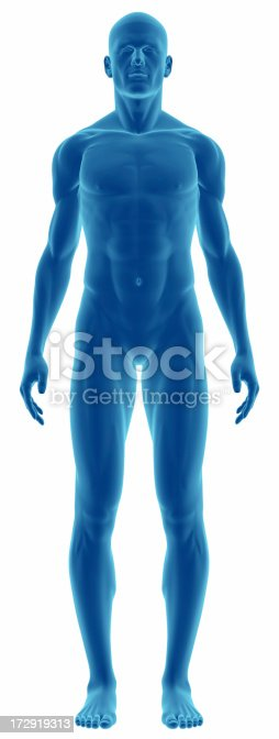 istock Human body of a man for study 172919313