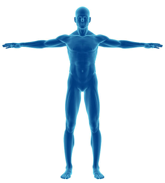 human body of a man for study - animal body part stock pictures, royalty-free photos & images