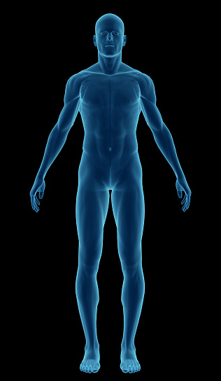 istock Human body of a man highlighting your muscles 174907035
