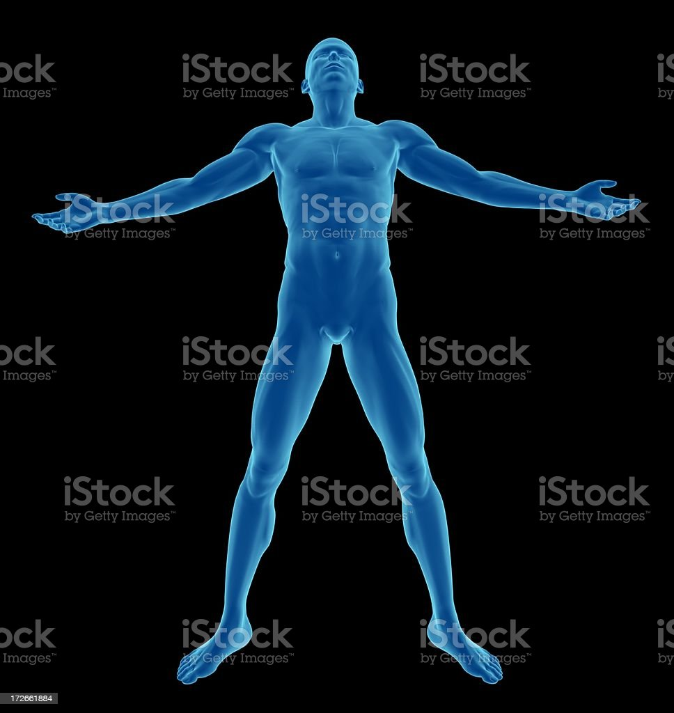 Human body of a man, standing and tough royalty-free stock photo