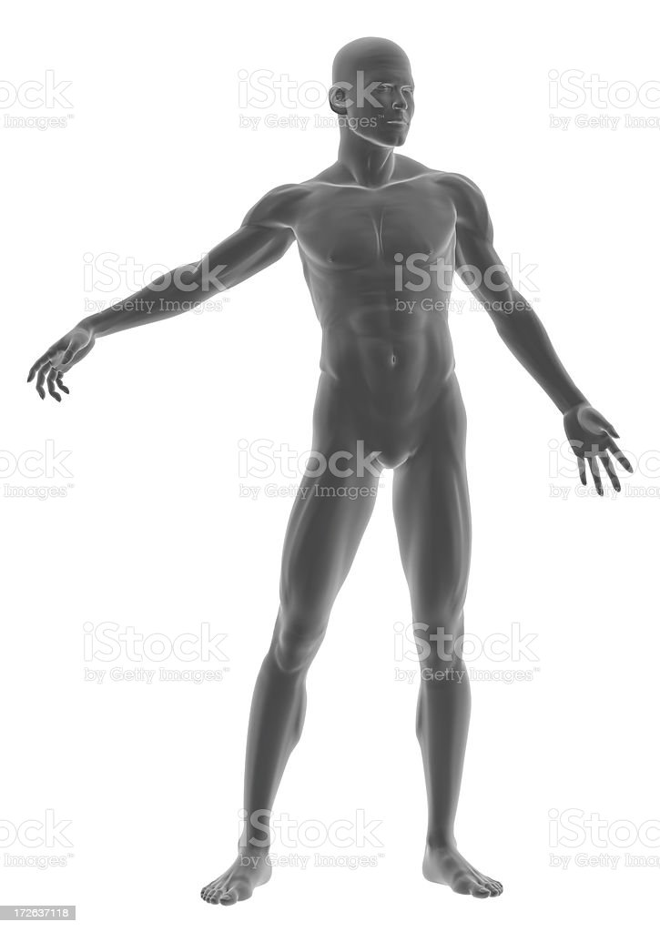 Human body of a man, standing royalty-free stock photo