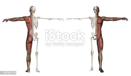 istock Human body of a man with  muscles and skeleton 178181713