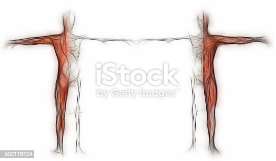 istock Human body of a man with  muscles and skeleton 502119124