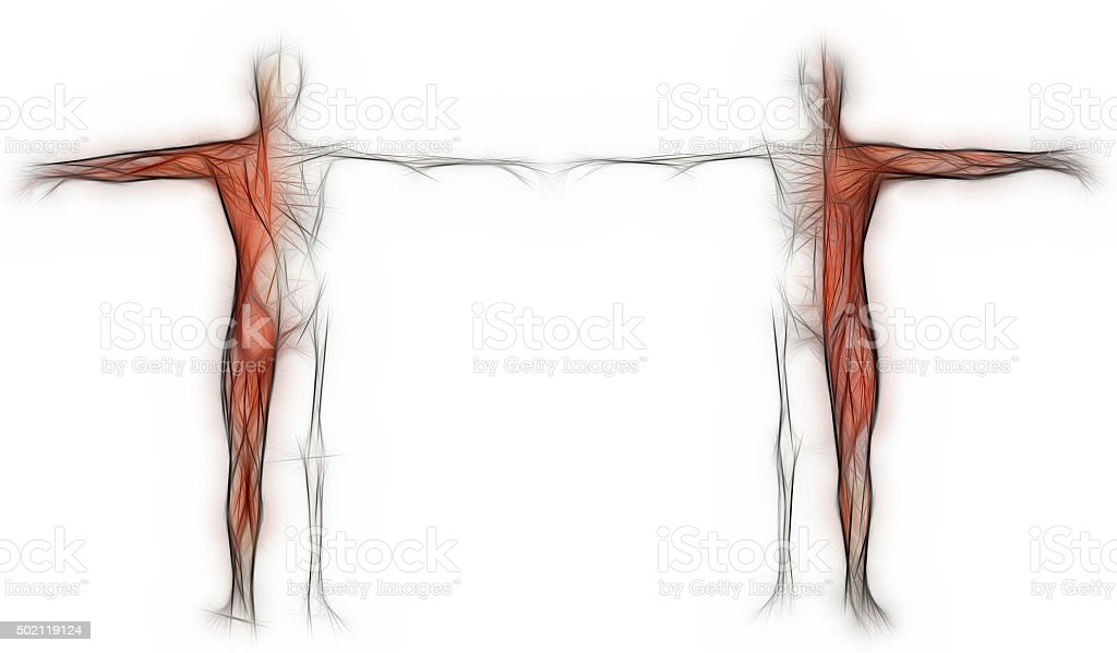 Human body of a man with  muscles and skeleton stock photo