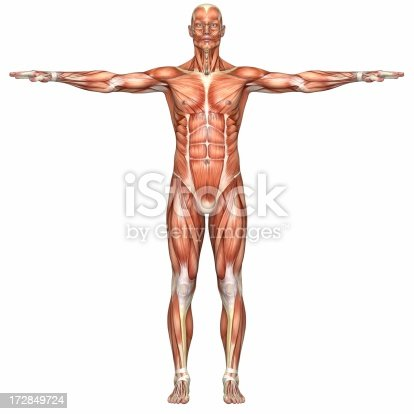 istock Human body of a man with muscles 172849724
