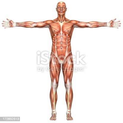 istock Human body of a man with muscles 172852513