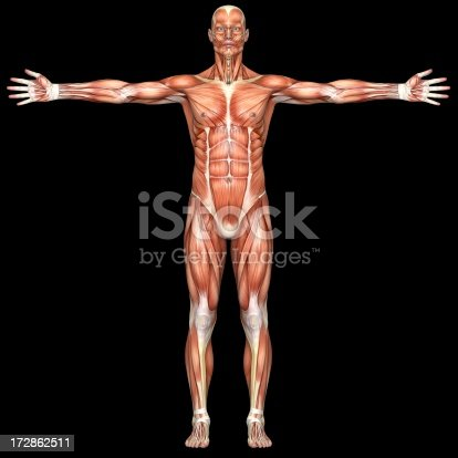 istock Human body of a man with muscles 172862511