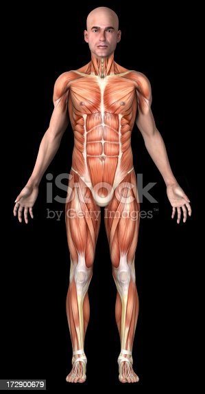 istock Human body of a man with muscles 172900679