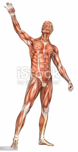 istock Human body of a man with muscles 172909614