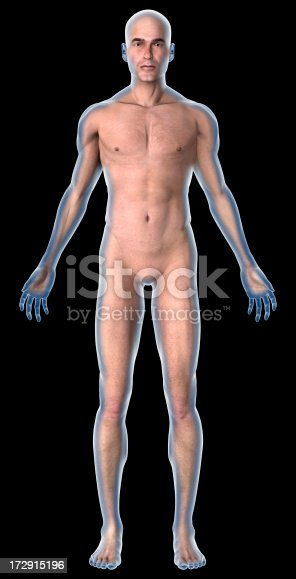 istock Human body of a man with muscles 172915196