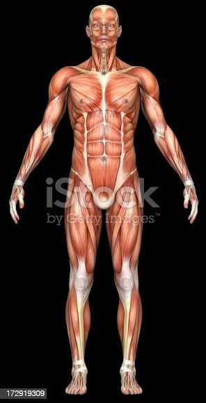 istock Human body of a man with muscles 172919309
