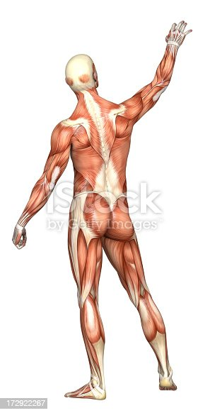 istock Human body of a man with muscles 172922267