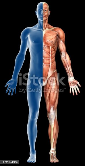 istock Human body of a man with muscles 172924982