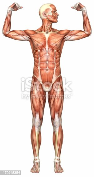istock Human body of a man with muscles 172948354