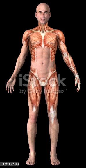 istock Human body of a man with muscles 172966203