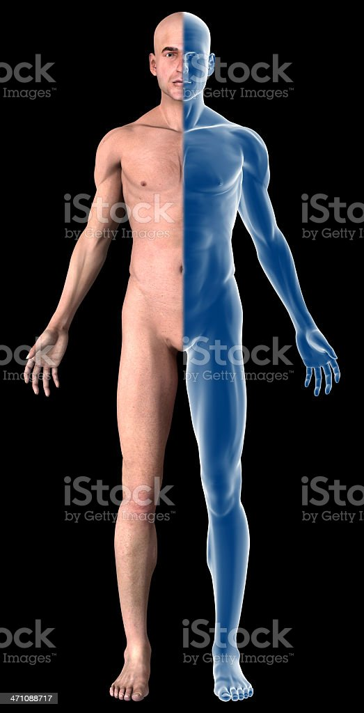Human body of a man with muscles royalty-free stock photo