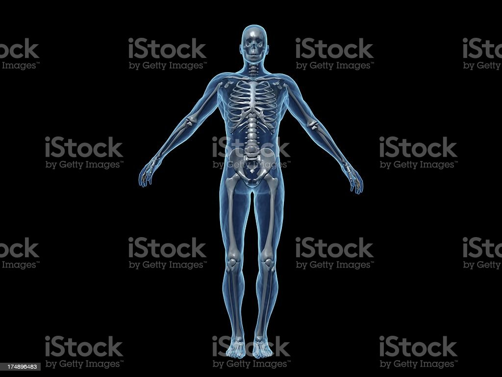 Human body of a man with skeleton for study stock photo