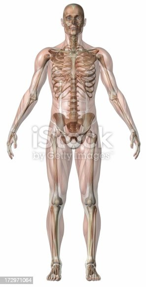 496193187 istock photo Human body of a man with transparent muscles and skeleton 172971064