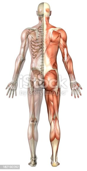 496193187 istock photo Human body of a man with transparent muscles and skeleton 182192252
