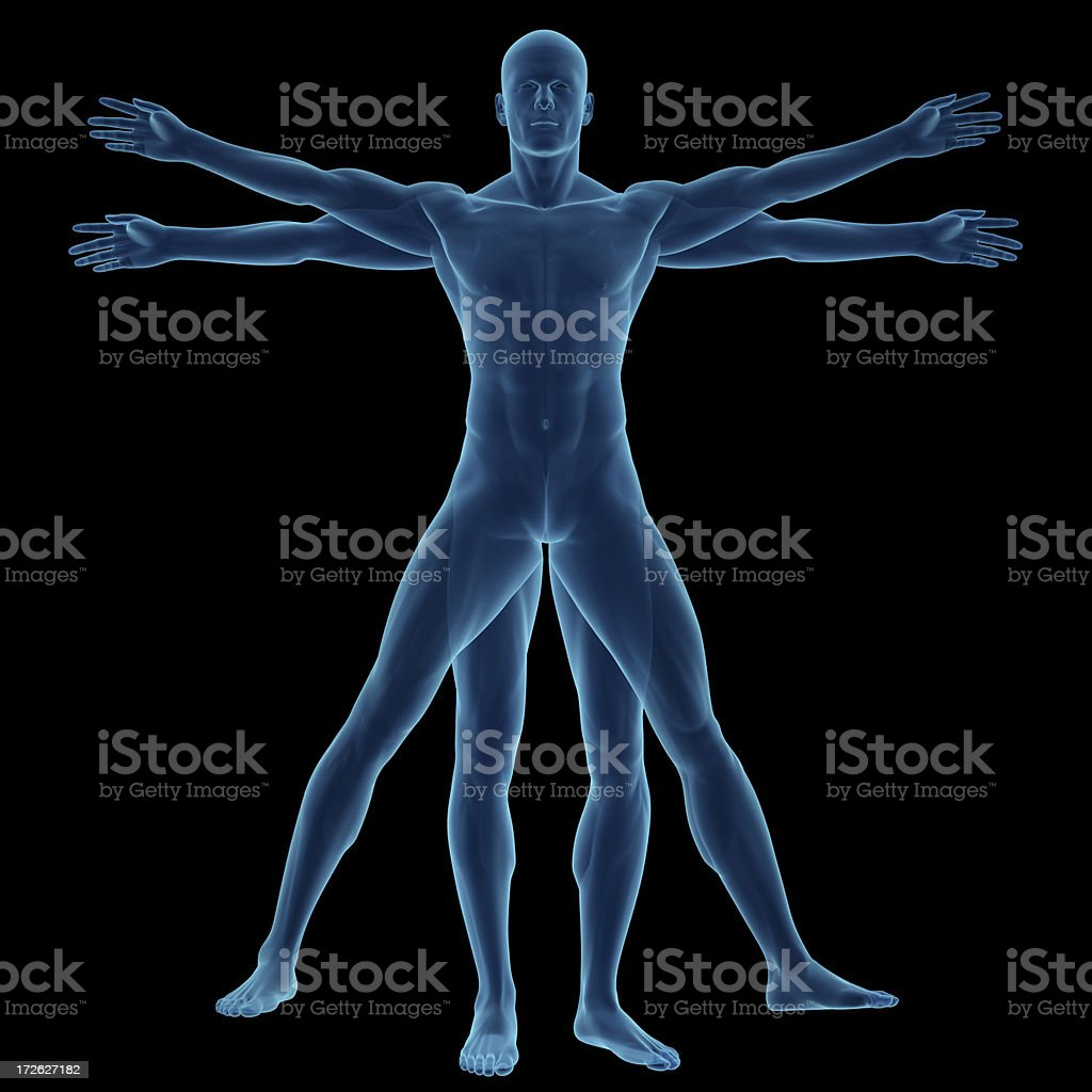 Human body of a Vitruvian man for study stock photo