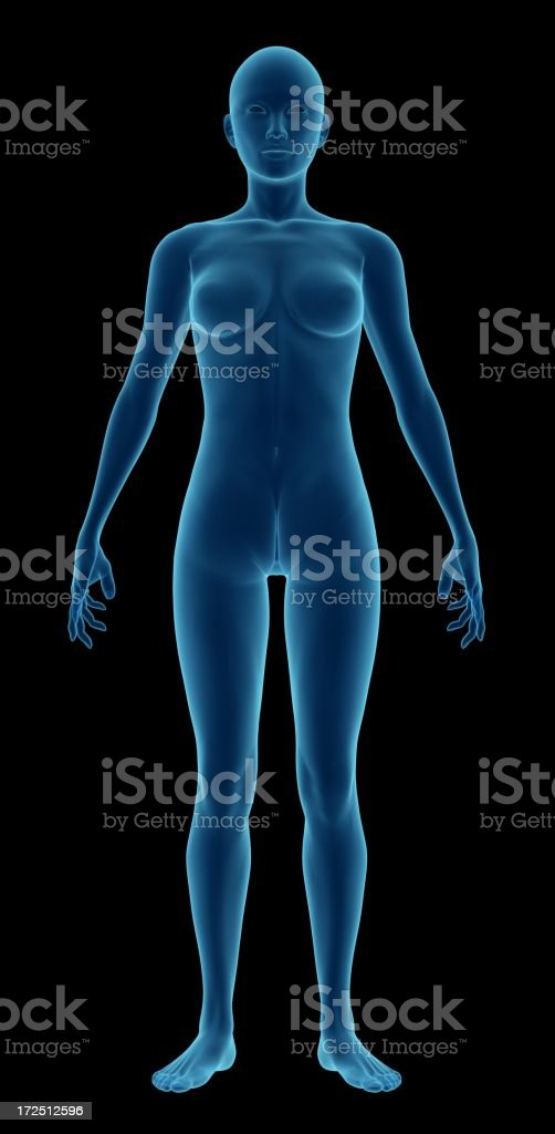 Human body of a woman for study royalty-free stock photo
