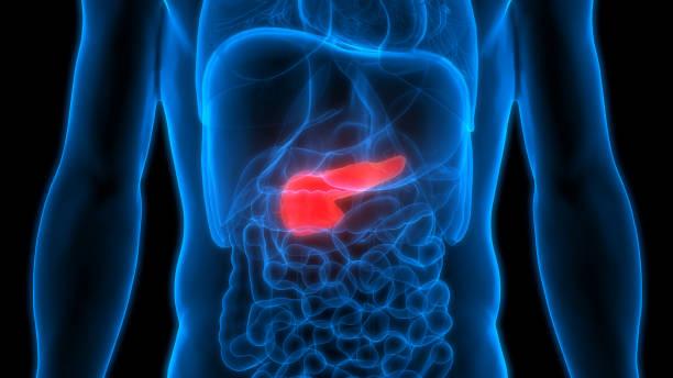 human body organs anatomy (pancreas) - biomedical illustration stock pictures, royalty-free photos & images