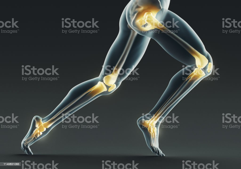 Human body parts, x ray, 3d rendering