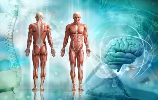人類的身體 - 人體部分 個照片及圖片檔