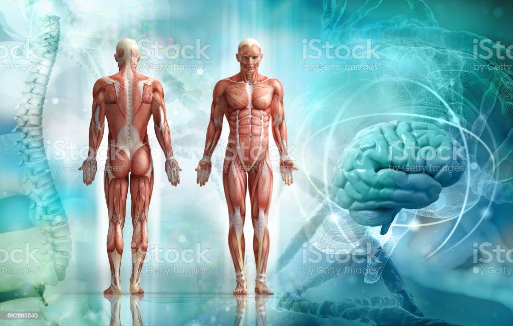 Cuerpo humano - foto de stock