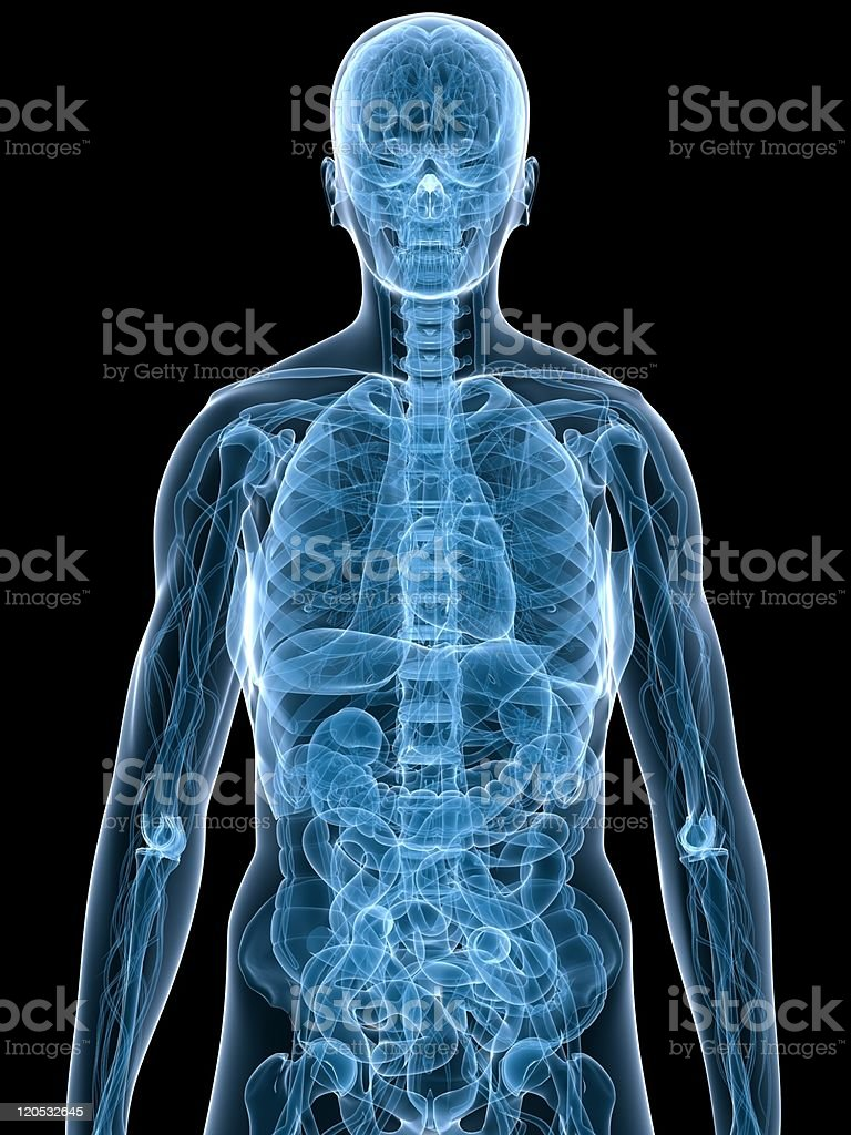 Human body scan showing anatomy stock photo