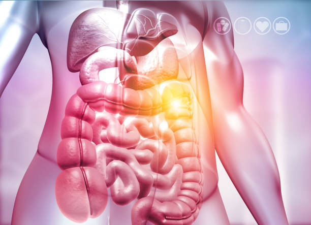 Human body with digestive system stock photo