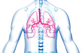 istock Human body with lungs 1192251568
