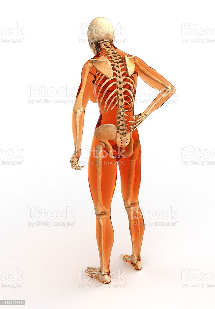Human Body With Skeleton Back View Stock Photo More Pictures Of