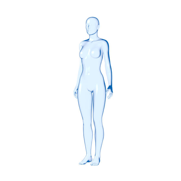 human body, woman - human body 3d stock photos and pictures