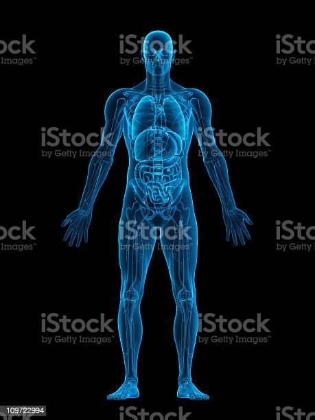 Human Body Xray Stockfoto en meer beelden van Anatomie