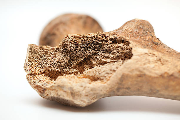 Human bone texture stock photo