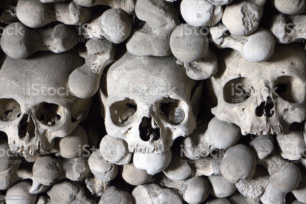 Menschlicher Knochen – Foto