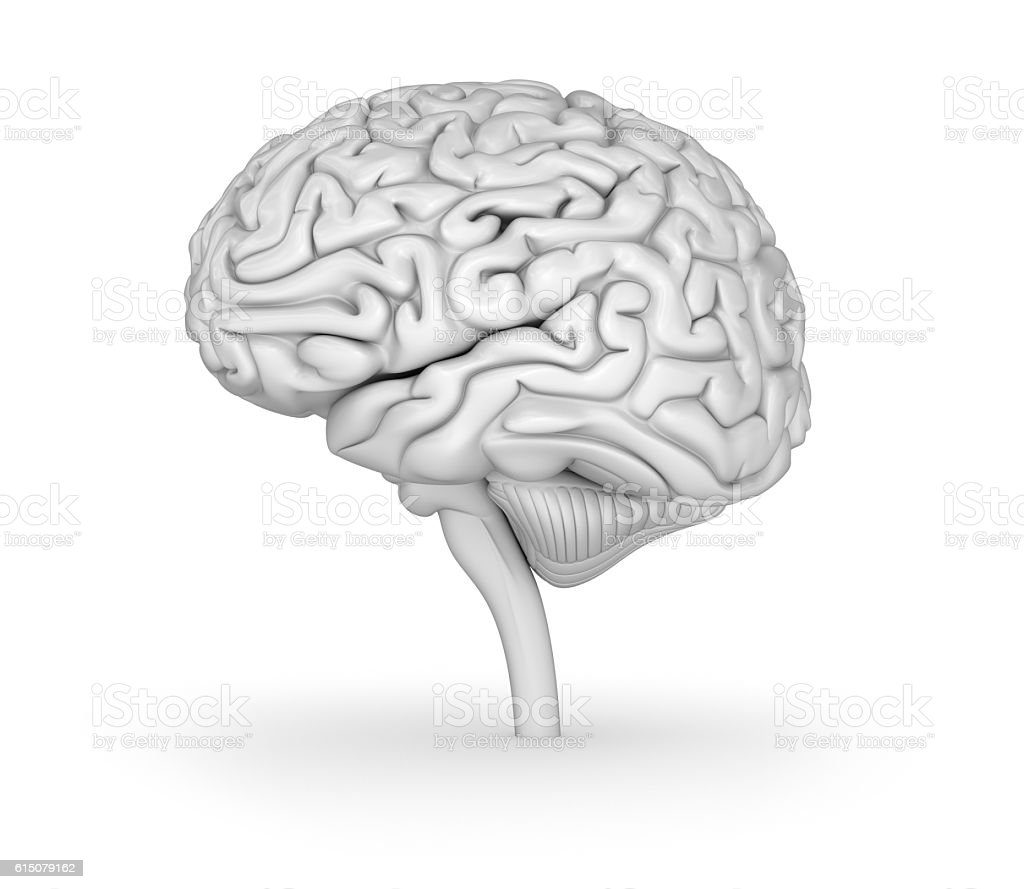 Human Brain 3d Model Medically Accurate 3d Illustration Stockfoto ...