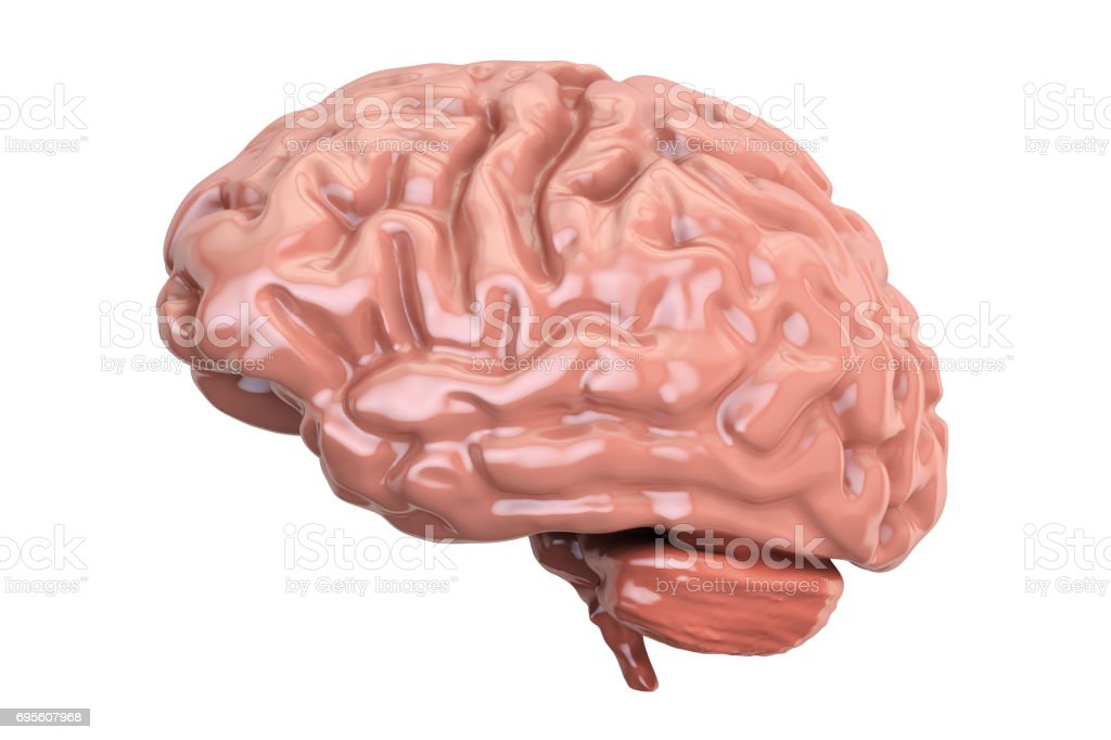Human Brain, 3D rendering isolated on white background stock photo