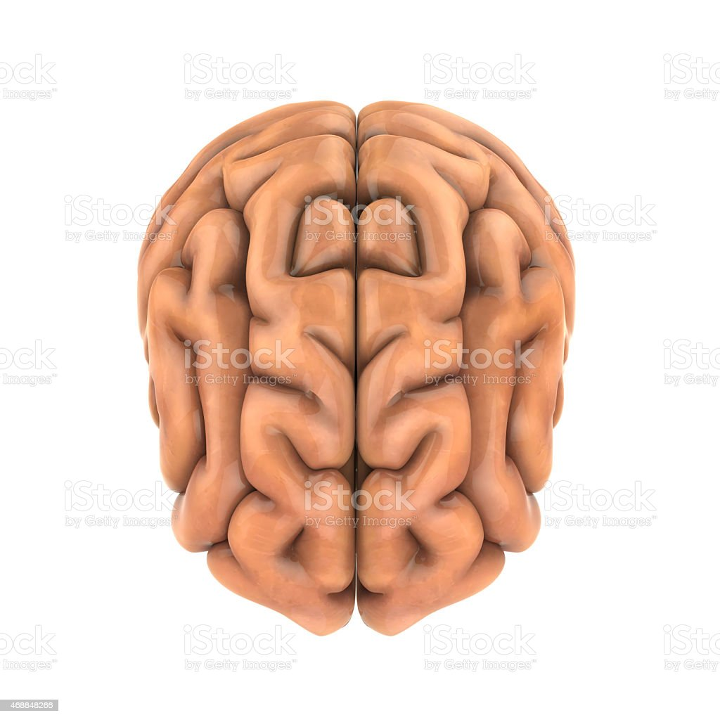 Human Brain Anatomy Stock Photo More Pictures Of 2015 Istock